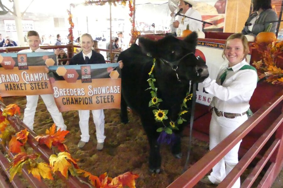 Beef show awards