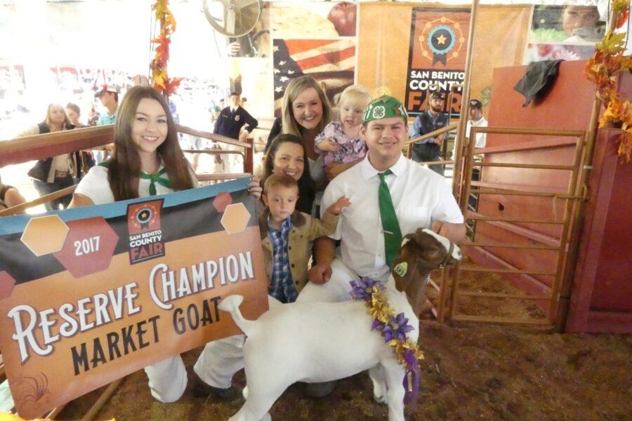 Reserve champion market goat show award