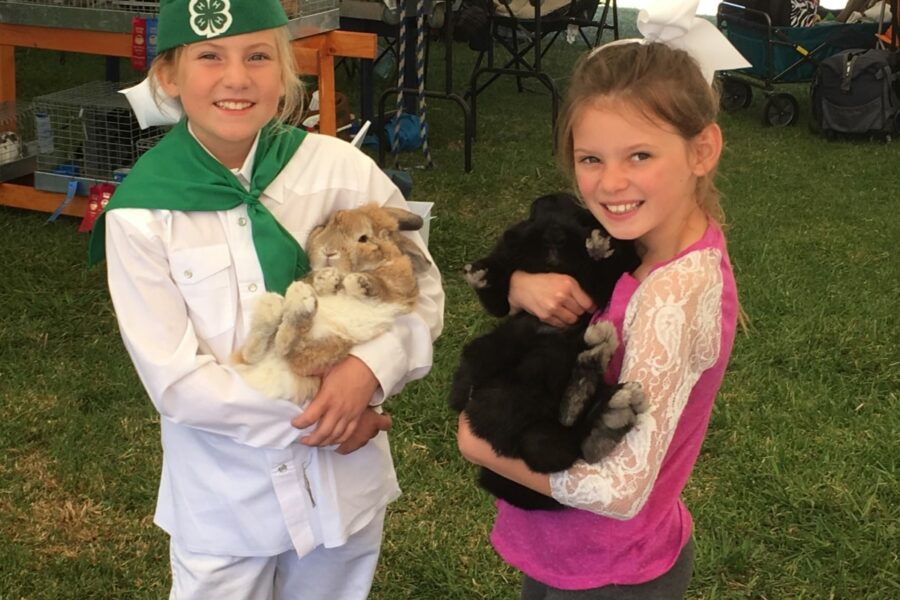 Kids rabbits - 4H